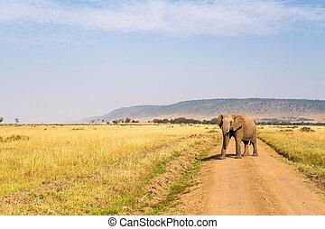 parc, safari, éléphant