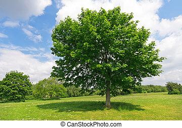 parc vert, arbre