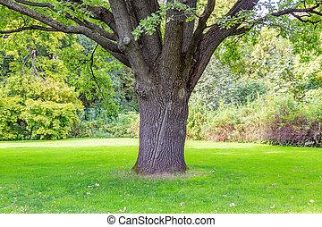 parc, vieux, arbre chêne, ville