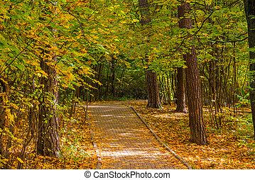 parc ville, automne, piste, touristes, paysage