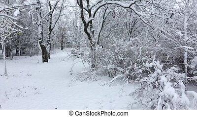 parc ville, chute neige