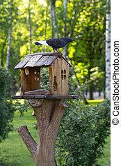 parc ville, colombe