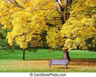 parc ville, dans, automne