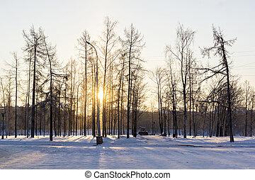 parc ville, hiver, jour, glacial