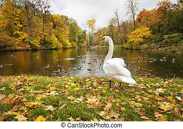 parc ville, lac