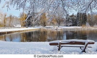 parc ville, neige, premier