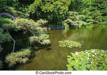 parc, yoyogi, tokyo, étang, japon