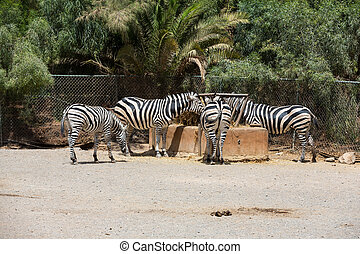parc, zebra, safari