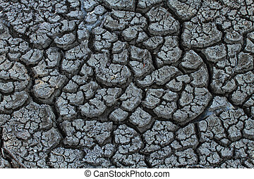 Parched Earth - Cracked and parched dry earth