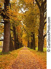parco, alberi autunno