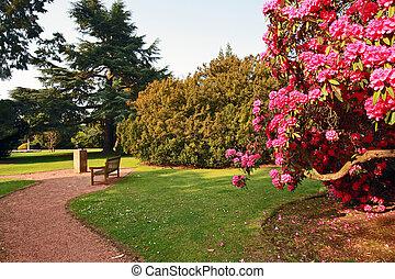 parco, azalea, vecchio, bello, albero