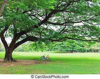 parco bicicletta