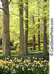 parco, con, fiori primaverili, sotto, vecchio, beechtrees