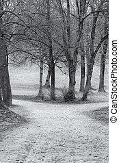 parco, inverno, vista