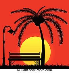 parco, palma, tramonto, panca
