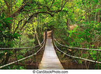 parco, ponte, nazionale, giungla, yai