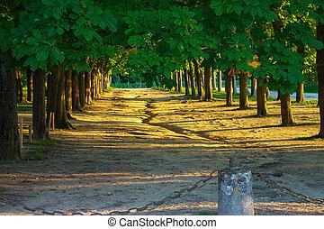 parco, vecchio, albero, vicolo, pittoresco