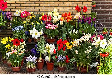 pared, con, colección, de, colorido, flores del resorte