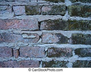 pared, humedad, molde, ladrillo