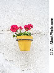 pared, pot., montado, flor