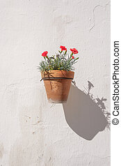 pared subida, flor, pot.