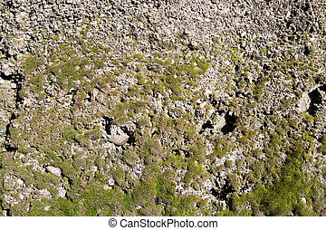 parede, concreto, verde, musgo