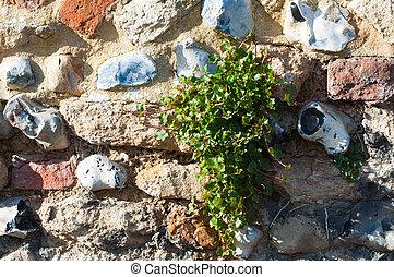 parede, crescendo, através, erva daninha jardim