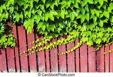 parede madeira, videira, vermelho