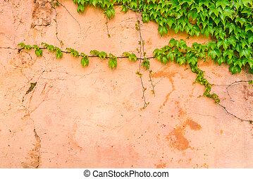 parede, pedra, antigas, folhas