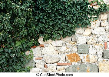 parede, pedra, hera