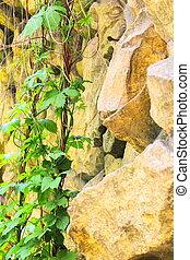 parede, pedra, planta, rastejar