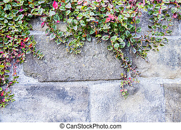 parede, pedra, videira