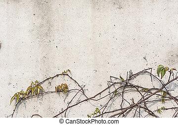 parede, planta, fundo