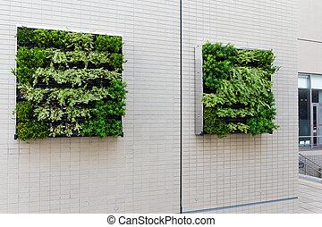 parede, planta potted