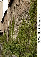 parede, videira, pedra, antigas, verde