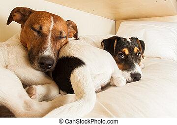 pareja, amor, dos, perros