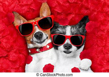 pareja, amor, perros, valentines