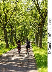 pareja, bicicleta que cabalga, por, árboles, callejón
