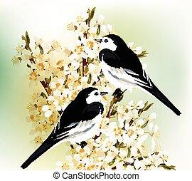 pareja, blanco, negro, si, aves