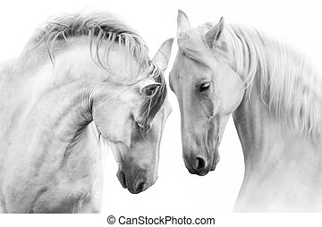 pareja, caballo blanco