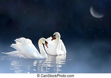 pareja, cisne