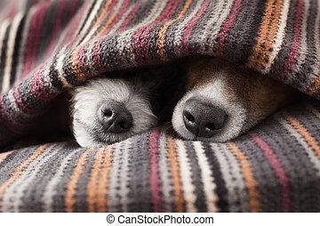 pareja, de, perros
