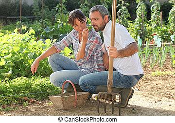 pareja, escoger, producto, en, un, jardín vegetal