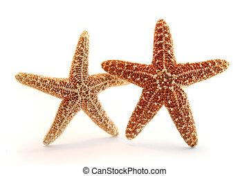 pareja, estrellas de mar