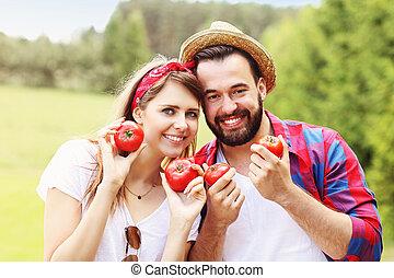 pareja joven, plantación, orgánico, tomates
