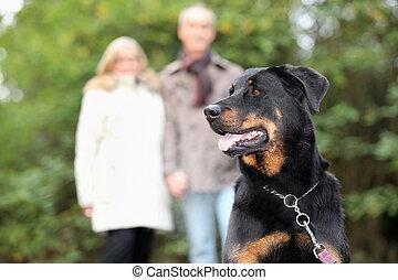 pareja mayor, perro caminante