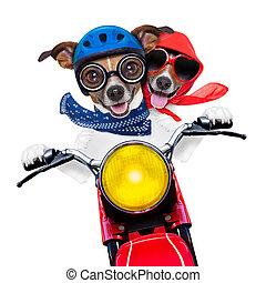 pareja, moto, perros
