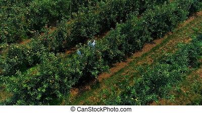 pareja, verde, granja, 4k, agricultura