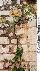 parete, casa, vite, roccia
