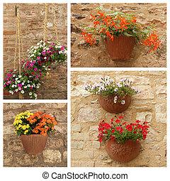 parete, fatto, di, immagini, con, vasi fiori, appendere, facciata, toscana,